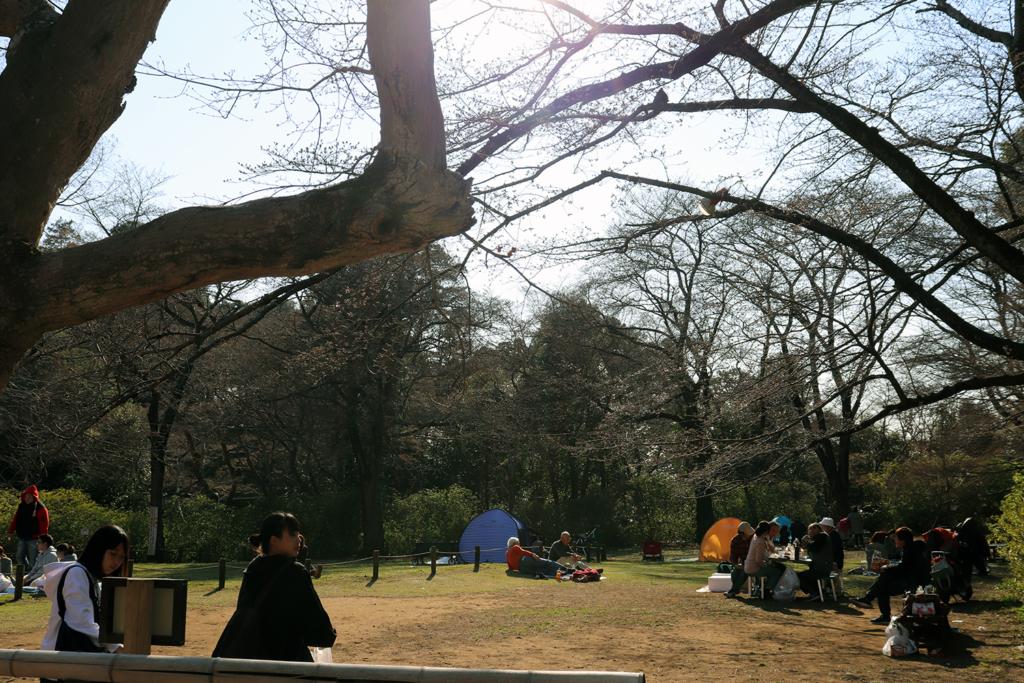 清水公園の広場