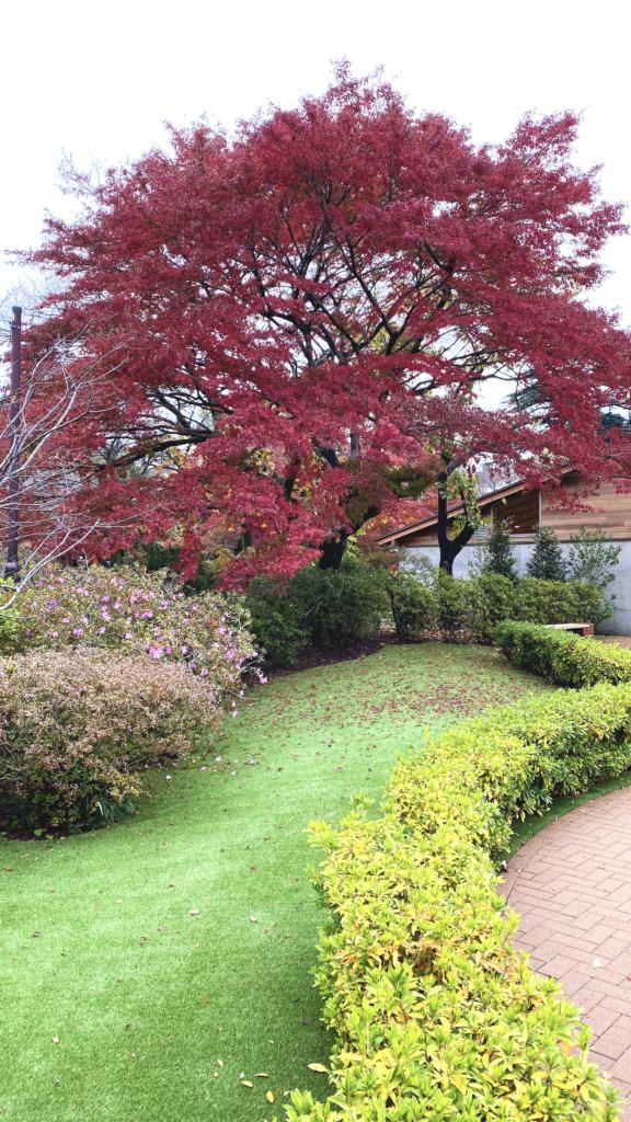 清水公園の紅葉2