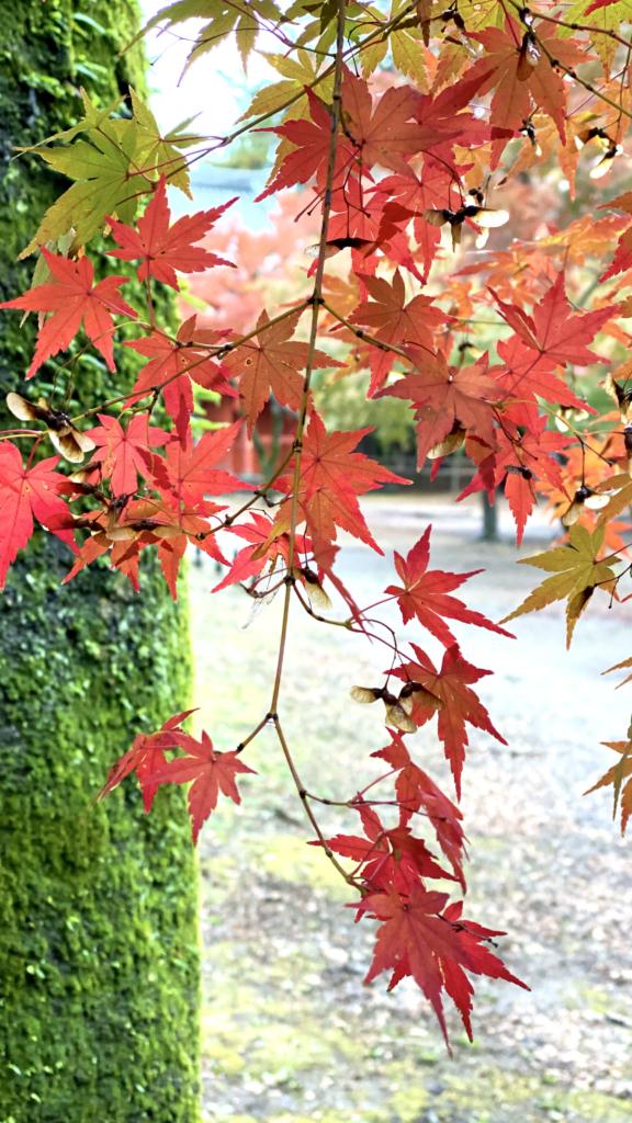 清水公園の紅葉5