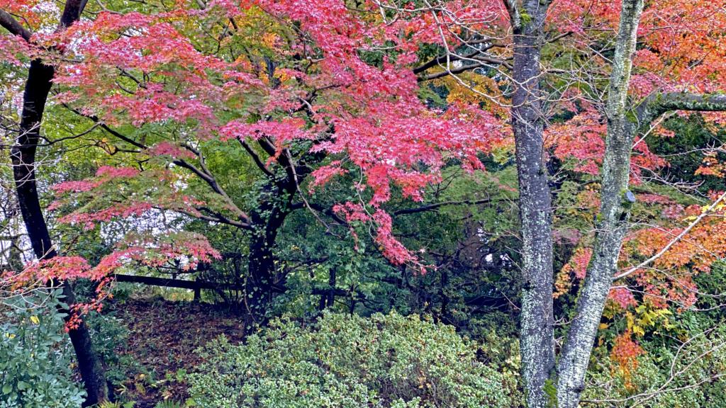 清水公園の紅葉4